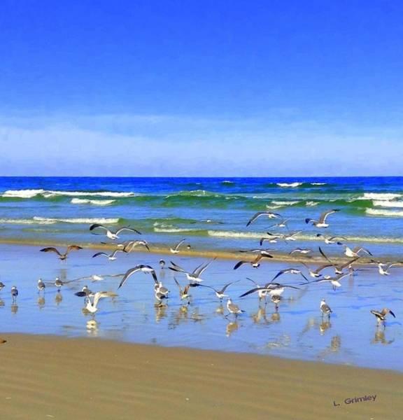 Wall Art - Photograph - Florida Sea Gulls by Lessandra Grimley