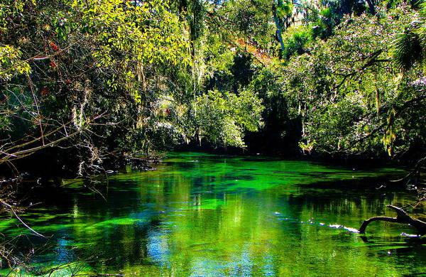 Photograph - Florida Swamp by Jp Grace