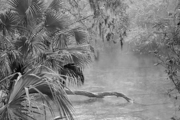 Photograph - Florida Swamp Lan 382 by G L Sarti