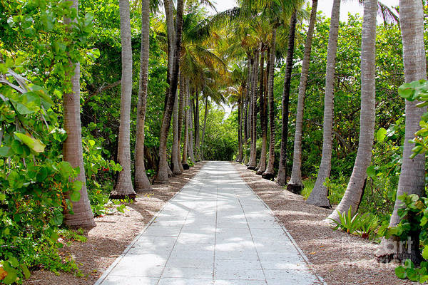 Key Biscayne Photograph - Florida Walkway by Carey Chen