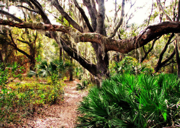 Photograph - Florida Woods by Peg Urban