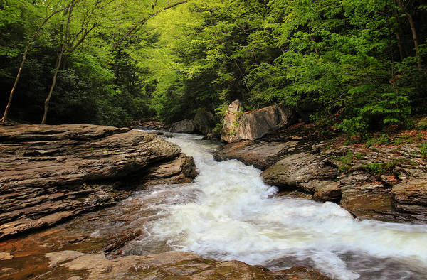 Photograph - Flow Of Forest Zen by Rachel Cohen