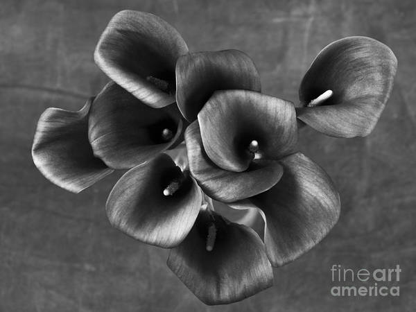 Photograph - Flower #248 by Hans Janssen