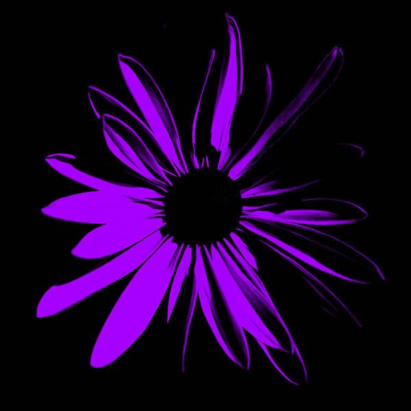 Digital Art - Flower 10 by Maggy Marsh