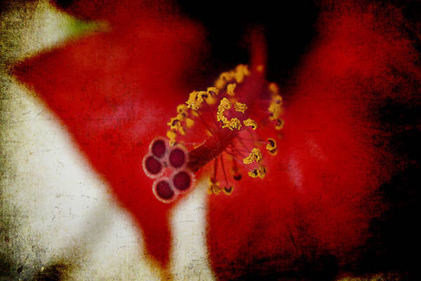 Photograph - Flower Abstract by Milena Ilieva
