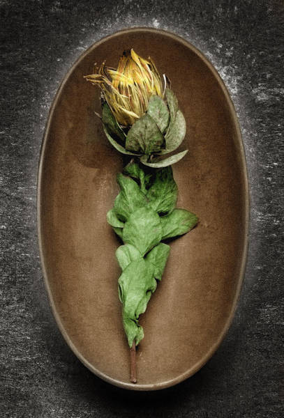 Wall Art - Photograph - Flower And Bowl by Tony Ramos