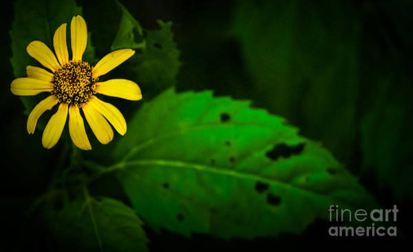 Photograph - Flower And Leaf by Michael Arend