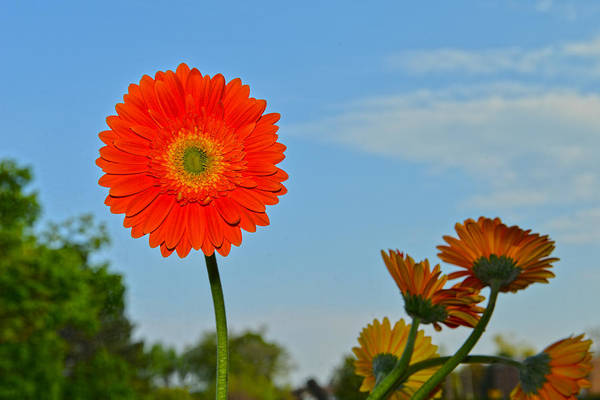 Photograph - Flower And The Sky by Dragan Kudjerski