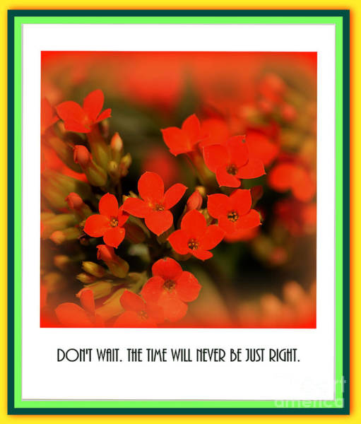 Photograph - Flower And Time Quote by Susanne Van Hulst