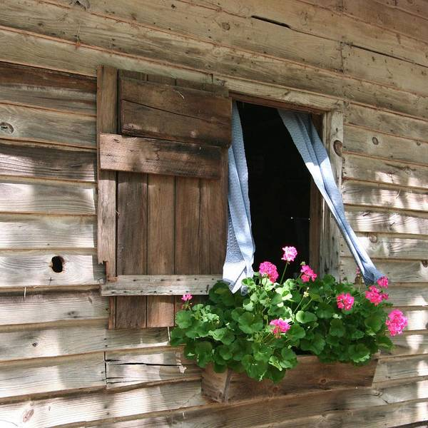 Photograph - Flower Box And Curtains - Square by Gordon Elwell
