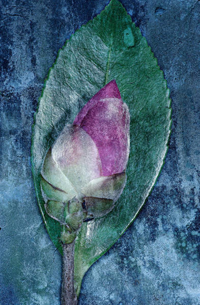 Photograph - Flower Bud by Russell Brown