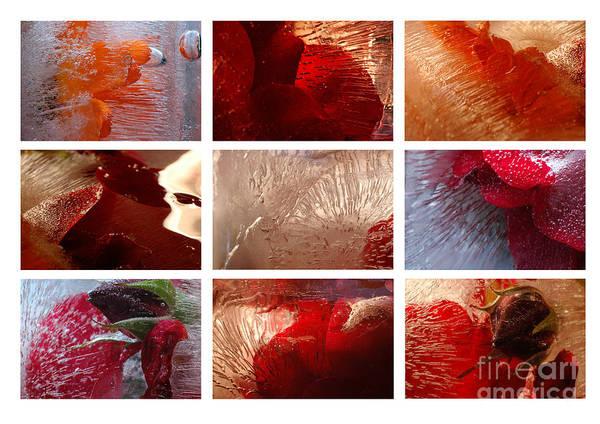 Photograph - Flower Collage Horisontal by Randi Grace Nilsberg