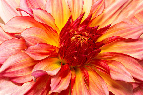 Photograph - Flower - Dahlia - Natures Breath Taker by Mike Savad