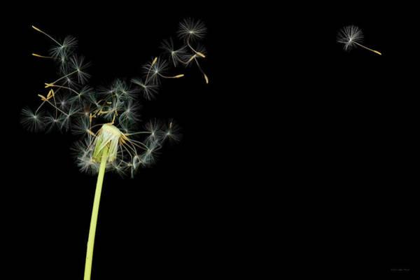 Photograph - Flower - Dandelion - Gesundheit  by Mike Savad