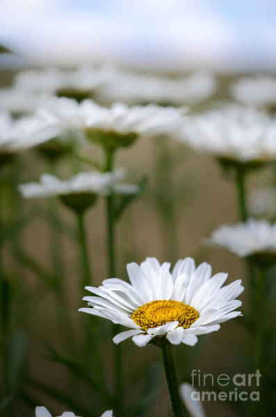 Photograph - Flower Day by Michael Arend