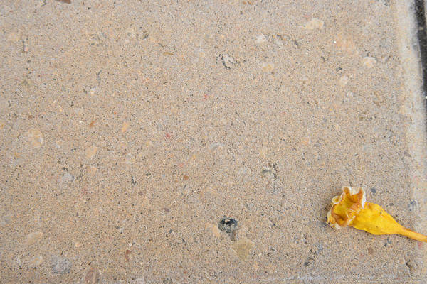 Photograph - Flower Dot by Teresa Blanton