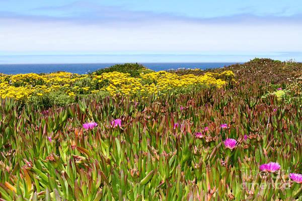 Photograph - Flower Fields On The Cliffs By Diana Sainz by Diana Raquel Sainz
