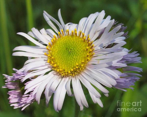 Wall Art - Photograph - Flower by Frank Piercy