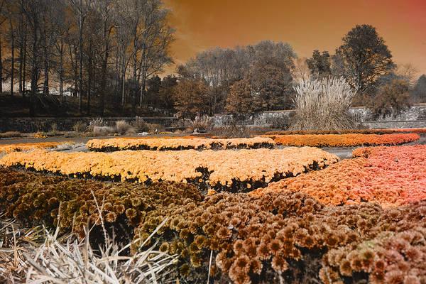 Wall Art - Photograph - Flower Garden by Betsy Knapp