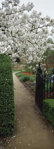 Wall Art - Photograph - Flower Garden, York, North Yorkshire by Panoramic Images