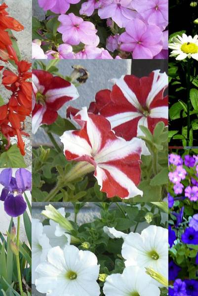 Photograph - Flower Gardens Montage by Mary Ann Leitch