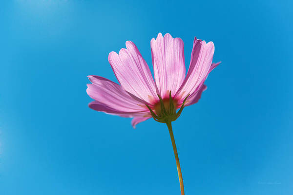 Photograph - Flower - Growing Up In Philadelphia by Mike Savad