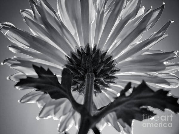 Above And Below Wall Art - Photograph - Flower IIi by L Bee