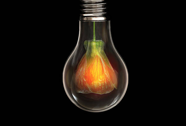 Wall Art - Digital Art - Flower In Bulb by Bess Hamiti