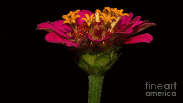 Photograph - Flower In Flower by Mareko Marciniak