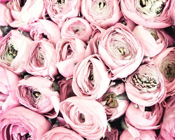 Pink Photograph - Flower Kisses by Lupen  Grainne