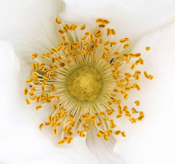 Photograph - Flower Macro by Sue Harper