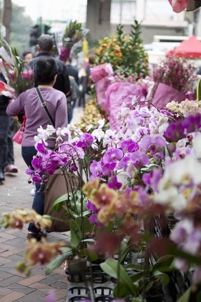 Hong Kong Orchid Photograph - Flower Market, Hong Kong, China by Cultura Rm Exclusive/nancy Honey