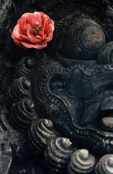 Photograph - Flower Of Bali by Shaun Higson