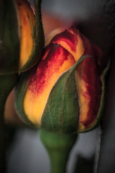 Photograph - Flower Of Night by Edgar Laureano