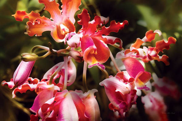 Photograph - Flower - Orchid - Oncidium Orchid - Eye Candy by Mike Savad