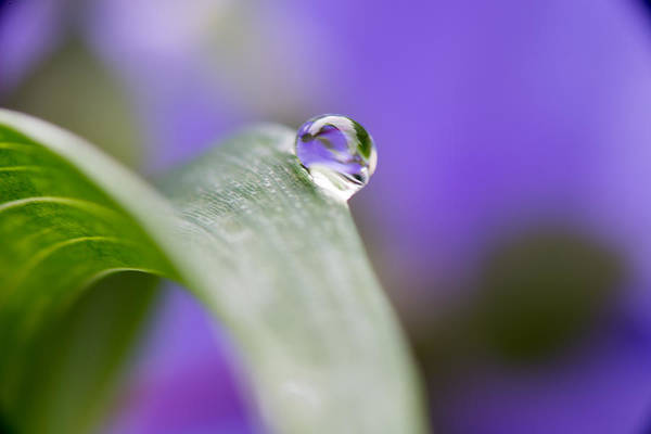 Photograph - Flower Petal In A Raindrop by Paul Johnson