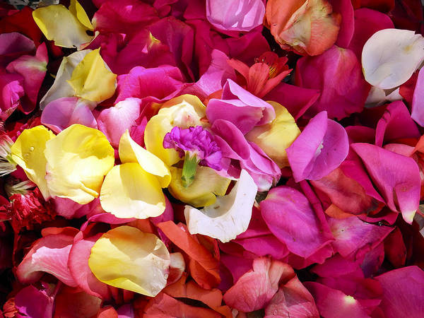 Photograph - Flower Petals At Flower Market Cuenca Ecuador by Kurt Van Wagner