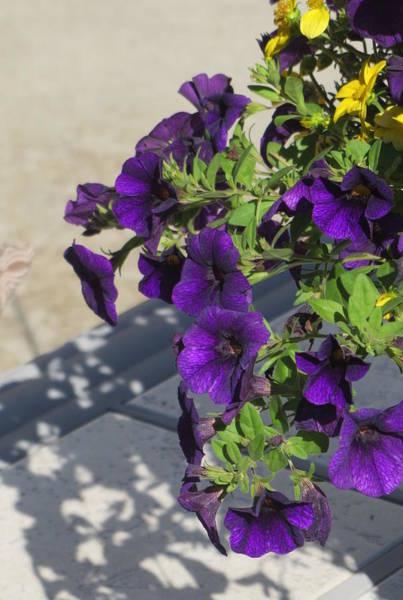 Photograph - Flower Pot And Shadows 1 by Anita Burgermeister