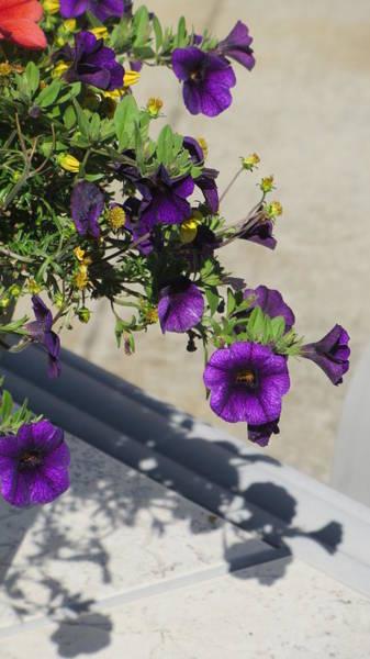 Photograph - Flower Pot And Shadows 2 by Anita Burgermeister