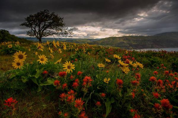 Rowena Photograph - Flower Power by Dan Mihai