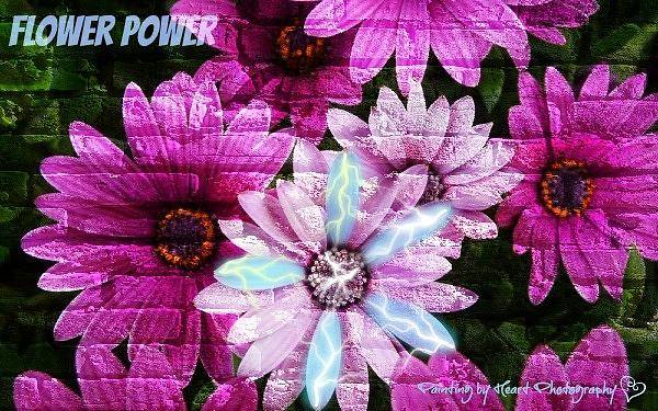 Photograph - Flower Power by Deahn      Benware