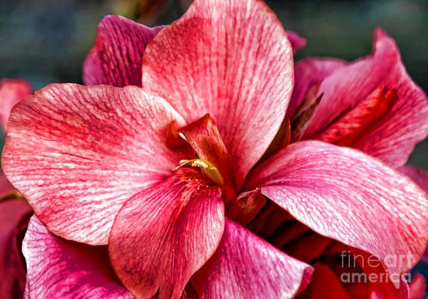 Photograph - Flower Power In Pink By Diana Sainz by Diana Raquel Sainz