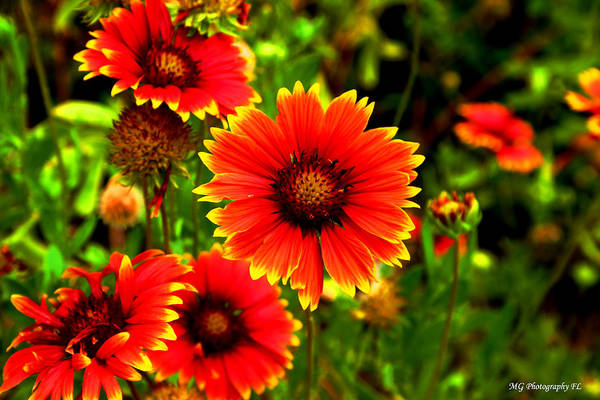 Photograph - Flower Power by Marty Gayler