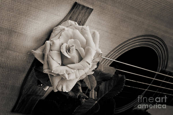 Photograph - Flower Rose Bloom On Guitar In Sepia 3263.01 by M K Miller