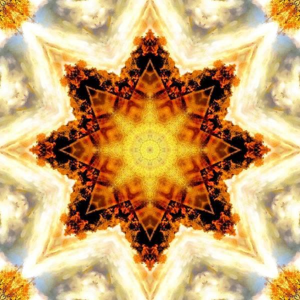 Photograph - Flower Stars by Derek Gedney