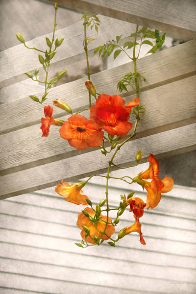 Photograph - Flower - Trumpet Melodies by Mike Savad