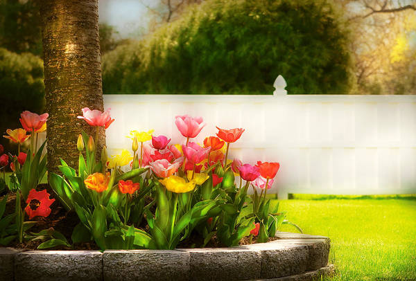 Photograph - Flower - Tulip - Spring Tulips by Mike Savad