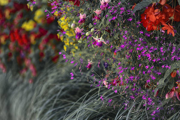 Photograph - Flower Wall At The Falls Selective Color by Scott Campbell