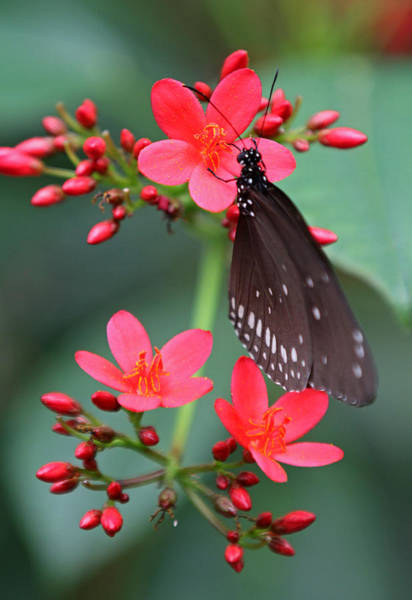 Photograph - Flower With Butterfly by Juergen Roth