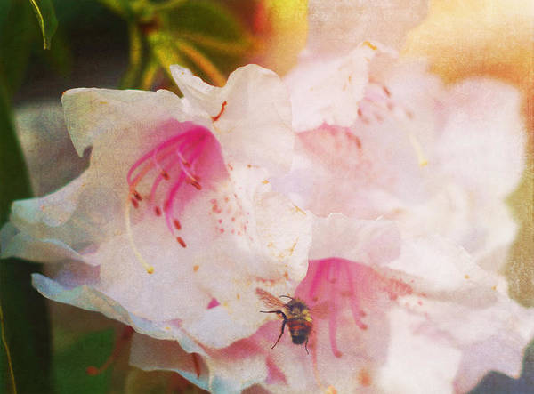 Photograph - Flower With Company by Marilyn Wilson